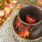 tisane-detox-autunno2